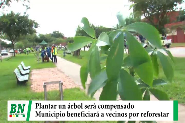Lee más sobre el artículo Municipio cruceño compensará con menos impuesto a los vecinos que realicen reforestación