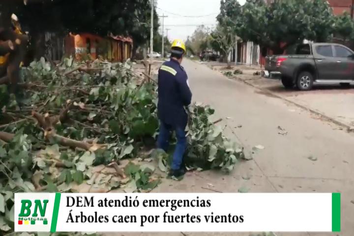 Lee más sobre el artículo Árboles caen por fuertes vientos y DEM ayuda en los barrios afectados