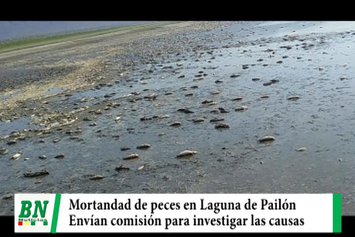 Lee más sobre el artículo Envían comisión para investigar mortandad de peces en Laguna Concepción de Pailón