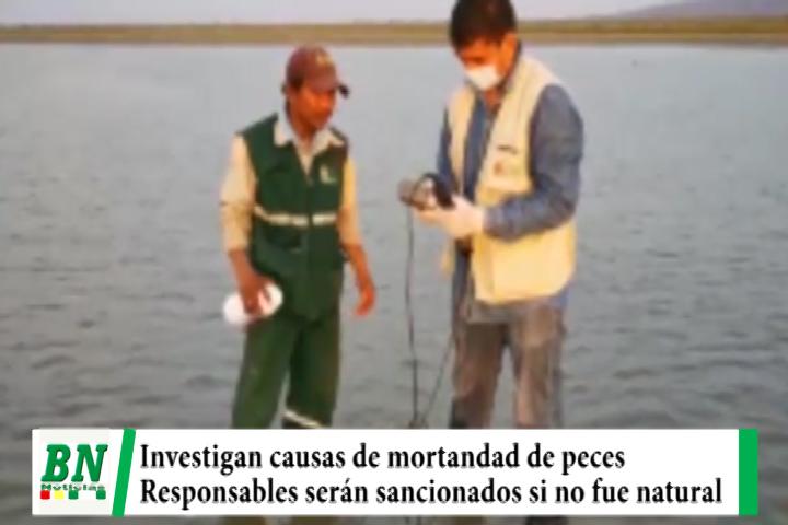 Lee más sobre el artículo Equipo técnico investiga causa de mortandad de peces y sancionarán a responsables