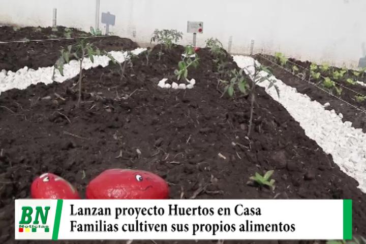 Lee más sobre el artículo Gobernación lanza su proyecto Huertos en Casa, buscan que familias cultiven sus propios alimentos
