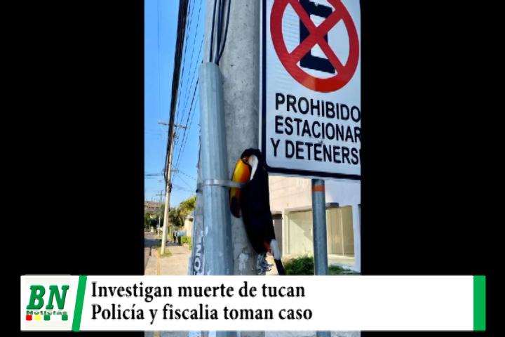 Lee más sobre el artículo Muerte de tucan que fue puesto en poste de luz se investiga y denuncia llega a policía y fiscalia