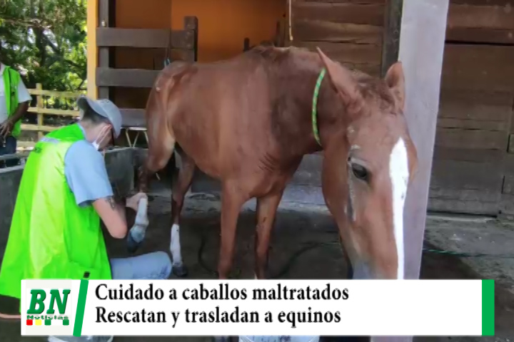Lee más sobre el artículo Rescatan y trasladan a caballos maltratados y dan atención veterinaria y cuidados necesarios