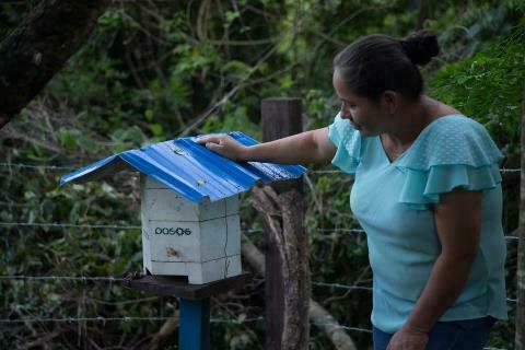 Lee más sobre el artículo Abejas del Chaco endulzan a los consumidoresde Bolivia y la vida de 342 productores