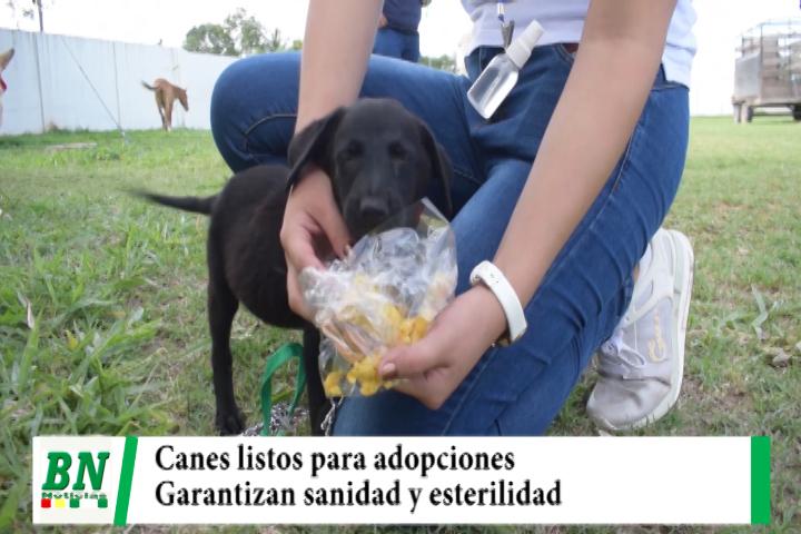 Lee más sobre el artículo Una docena de canes están listos para ser dados en adopción completamente sanos y esterilizados