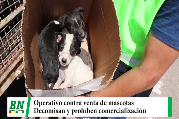 Lee más sobre el artículo Operativo contra venta de animales encuentra a mascotas en malas condiciones y las decomisa