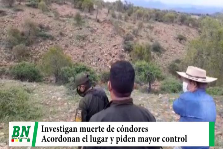 Lee más sobre el artículo Gobernación de Tarija y Policía investigan muerte de cóndores y acordonan el lugar, piden mayor control