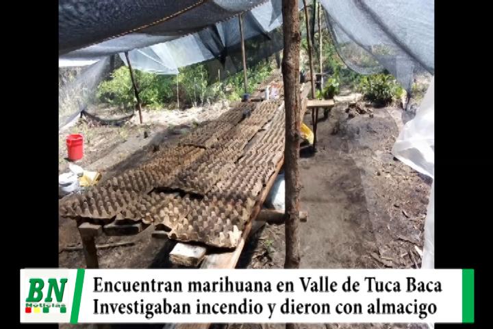 Lee más sobre el artículo Encuentran almacigo de marihuana y plantas sembradas en el Valle de Tuca Baca