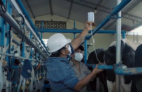 Lee más sobre el artículo La finca Zurita produce mil litros de leche por día y apoya a queserías de Yapacaní