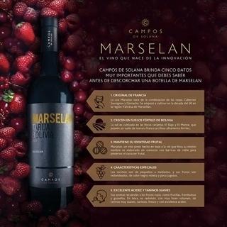 Lee más sobre el artículo El secreto para maridar el vino Marselan