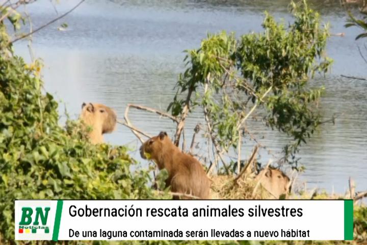 Lee más sobre el artículo Trabajan en el rescate de animales silvestres que se encuentran en una laguna contaminada