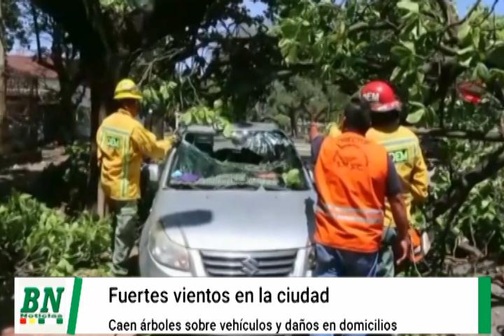 Lee más sobre el artículo Árboles caen sobre vehículos y en domicilios causando daños de consideración