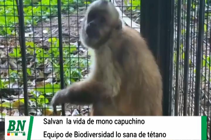 Lee más sobre el artículo Equipo de Biodiversidad salva la vida de un mono capuchino que estaba enfermo de tétano